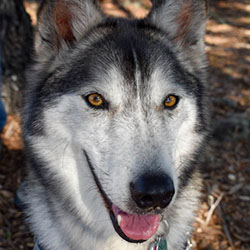 Iron Wolf Ranch